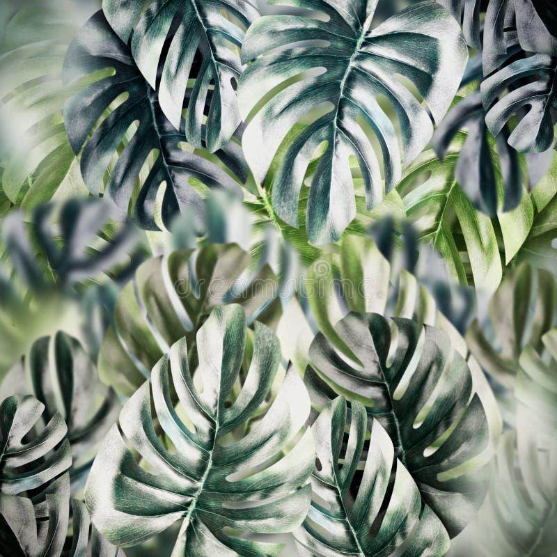 Tropische bladerenachtergrond De textuur van het Monsterablad stock fotografie