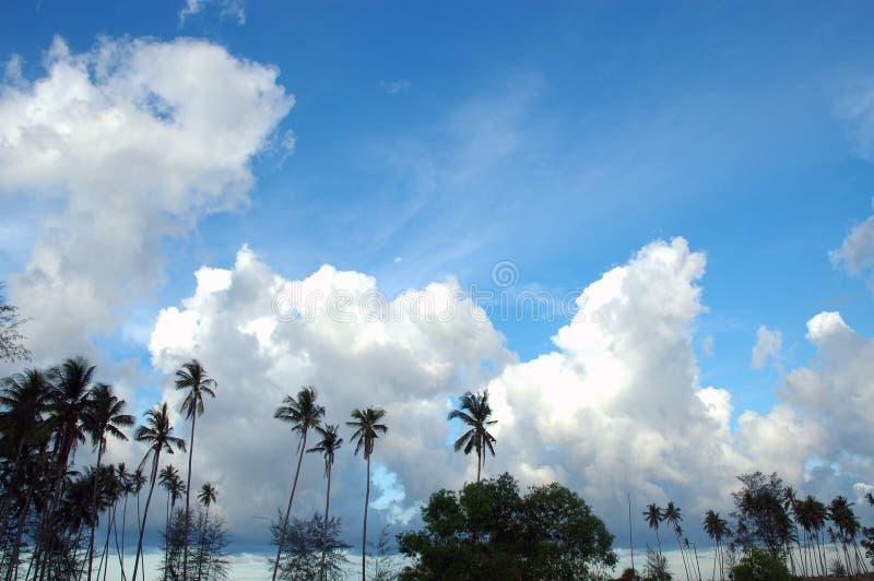 Tropische Blaue Himmel Lizenzfreies Stockbild