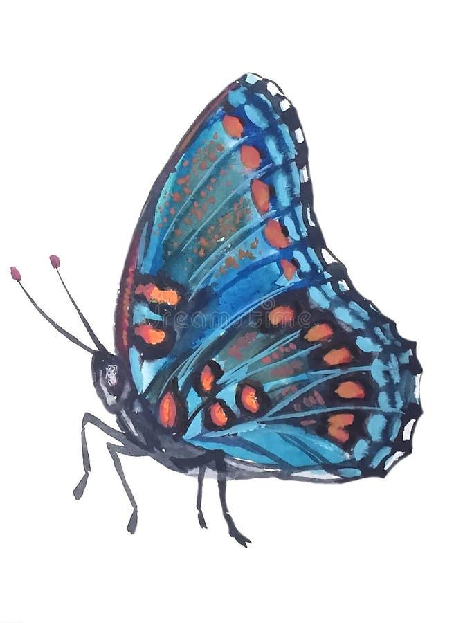 Tropische blauwe vlinder met oranje vlekken royalty-vrije illustratie
