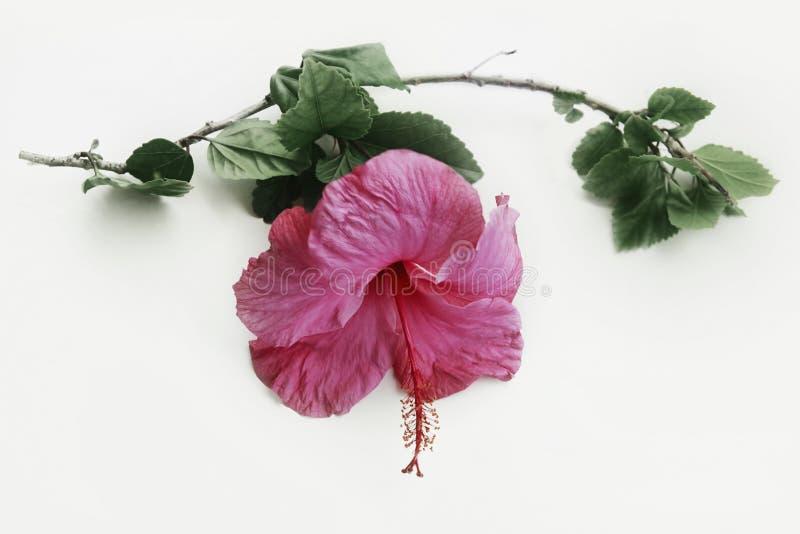 Tropische Bloem stock fotografie