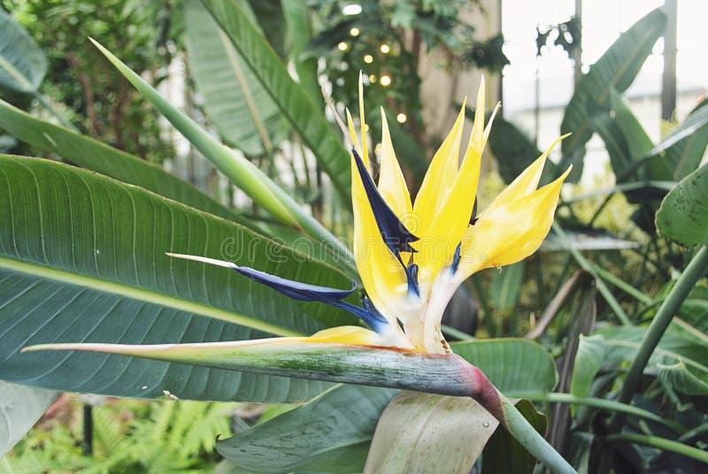 Tropische Bloem in de Tuin van de Winterparadise royalty-vrije stock afbeelding