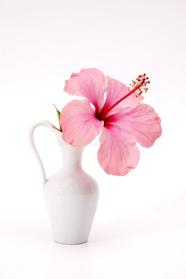 Tropische bloem in een vaas stock foto's