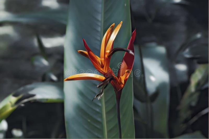 Tropische bloemclose-up met blad op achtergrond Groene en oranje humeurige digitale illustratie Paradijsvogel bloesem stock afbeelding