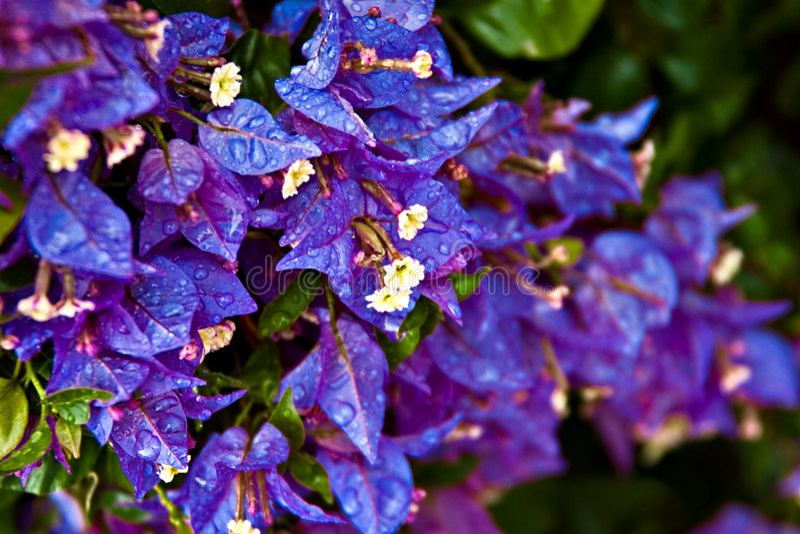 Tropische bloemen stock foto