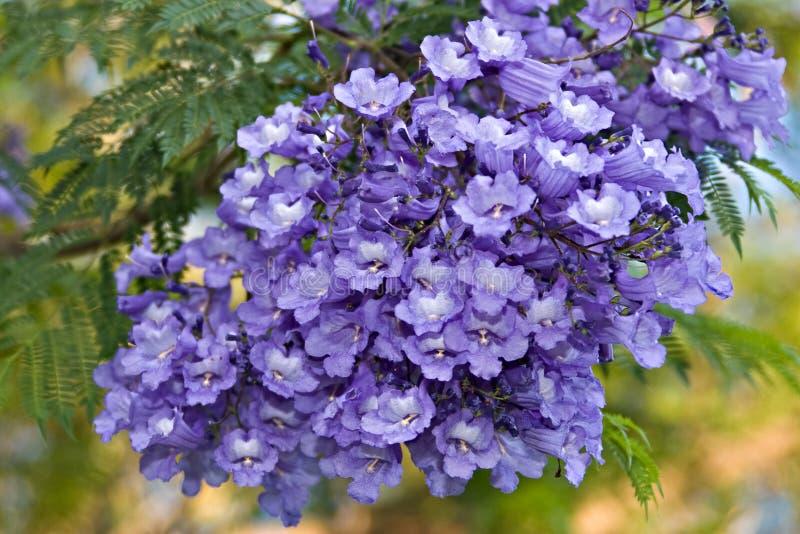 Tropische bloemen stock fotografie