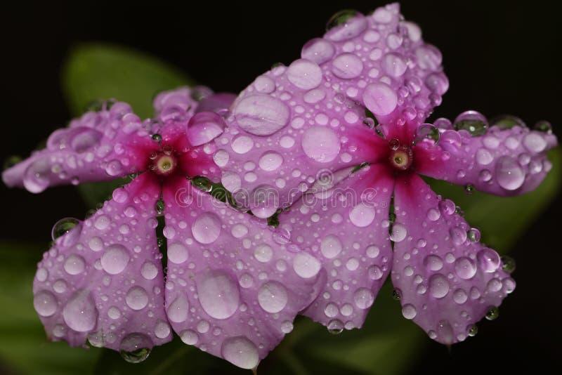 Tropische Bloemen royalty-vrije stock fotografie