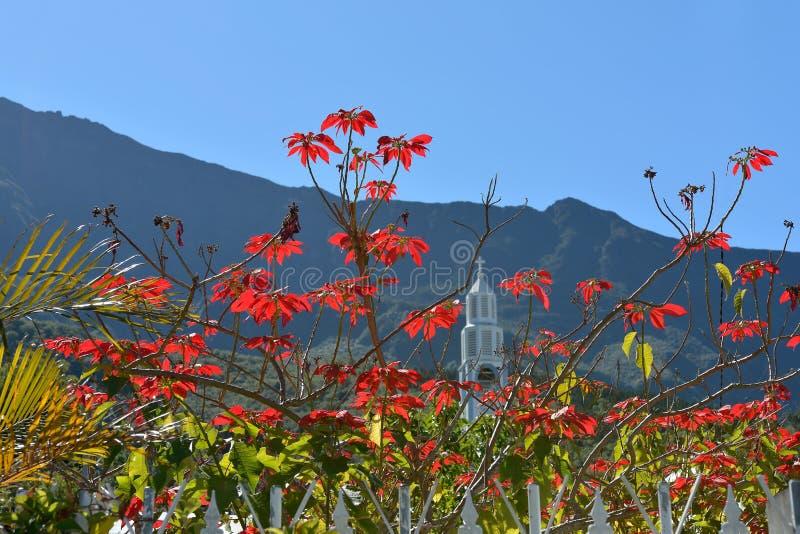 Tropische Bloemen royalty-vrije stock afbeelding