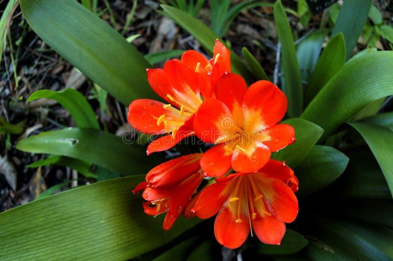 Tropische bloemen royalty-vrije stock foto's