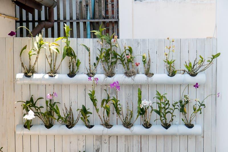 Tropische bloemen in potten - buizen stock afbeelding