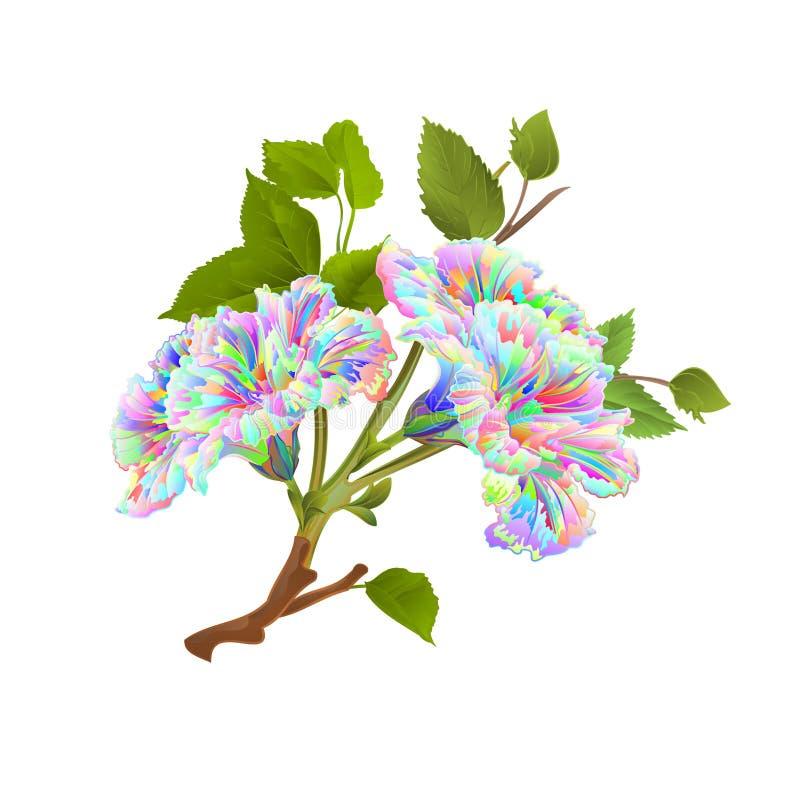 Tropische bloemen van de tak de multi gekleurde hibiscus op een witte uitstekende vector botanische editable illustratie als acht stock illustratie