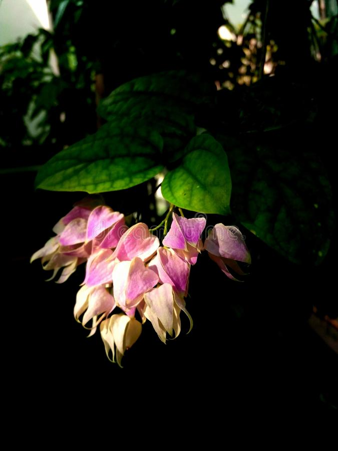 Tropische Blume stockfotografie