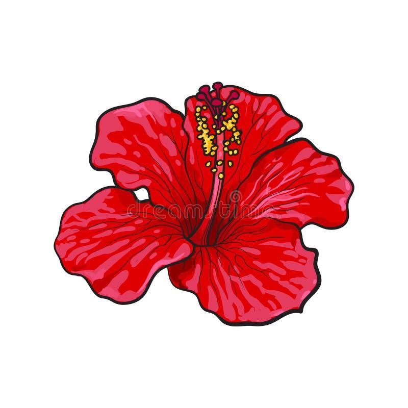 Tropische Blume des einzelnen hellen roten Hibiscus, Skizzenvektorillustration vektor abbildung