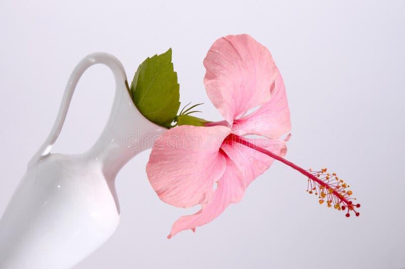 Tropische Blume in einem Vase lizenzfreie stockfotografie