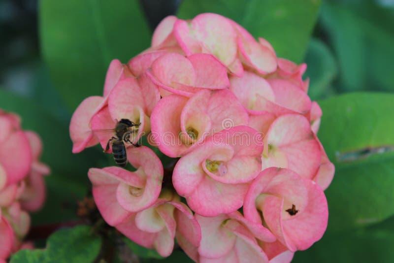 Tropische Blume und Biene lizenzfreie stockfotografie