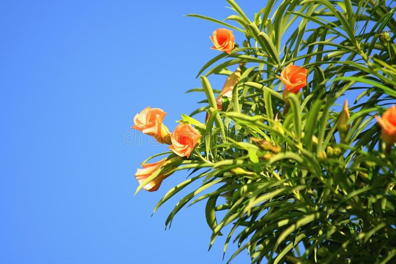 Tropische Blumen stockbilder