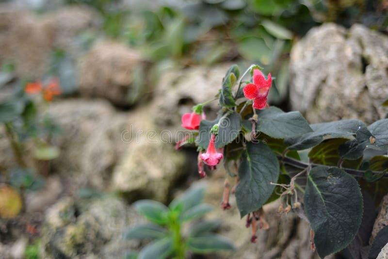 Tropische Blumen lizenzfreies stockbild