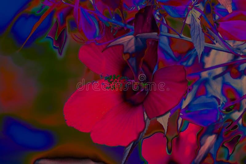 Tropische Blumen im Neonlicht stockbild