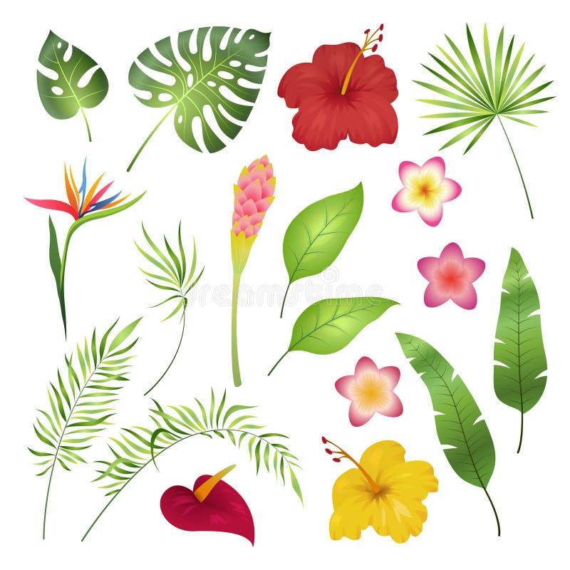 Tropische Blumen und Blätter Karibische tropische Blumenblatt-Hibiscusorchidee Hawaii exotisch, Gartendschungel-Sommerbild lizenzfreie abbildung