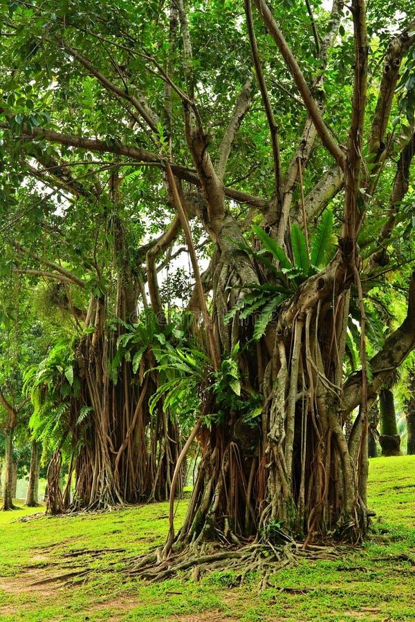 Tropische bomen stock foto