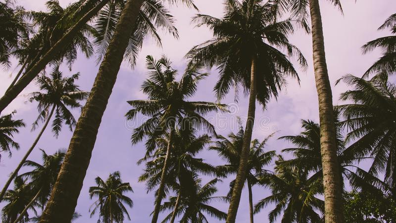 Tropische bomen in Azië stock afbeelding