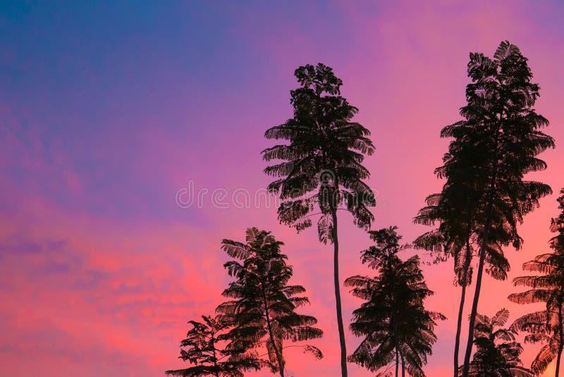Tropische bomen in Tucson Arizona bij zonsondergang stock afbeeldingen