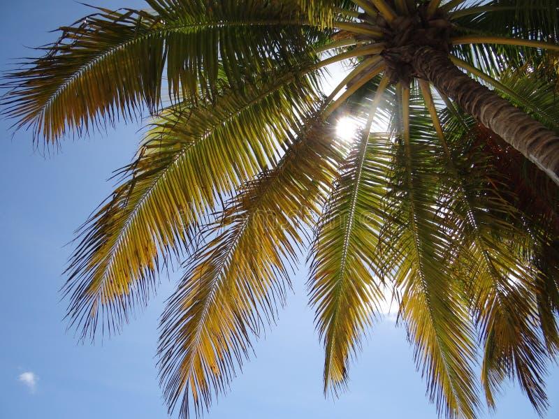 Tropische boom royalty-vrije stock afbeelding