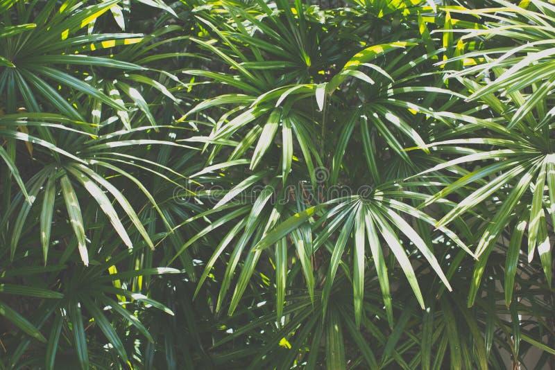 Tropische boom Uitstekende toon stock afbeeldingen