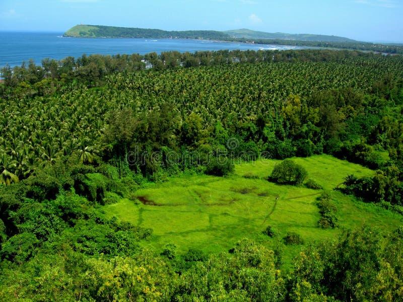Tropische bos en kustlijn royalty-vrije stock afbeelding
