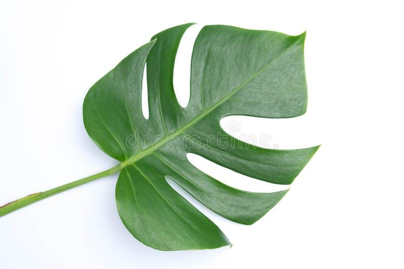 tropische botanische bladerenachtergronden op wit royalty-vrije stock fotografie