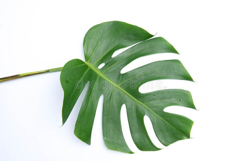 tropische botanische bladerenachtergronden op wit stock foto's