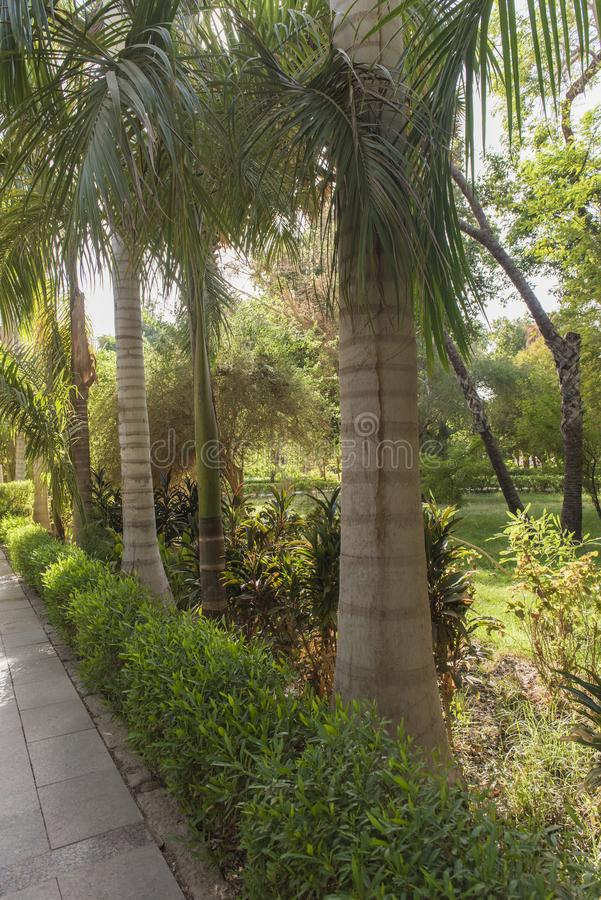 Tropische botanische tuinen in Aswan in Egypte stock afbeelding