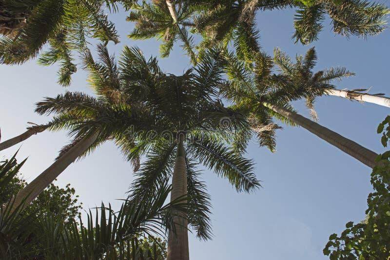 Tropische botanische tuinen in Aswan in Egypte stock foto's