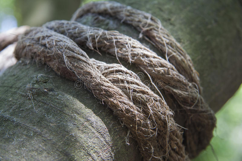 Tropische botanische wortels voor het tuinieren royalty-vrije stock foto
