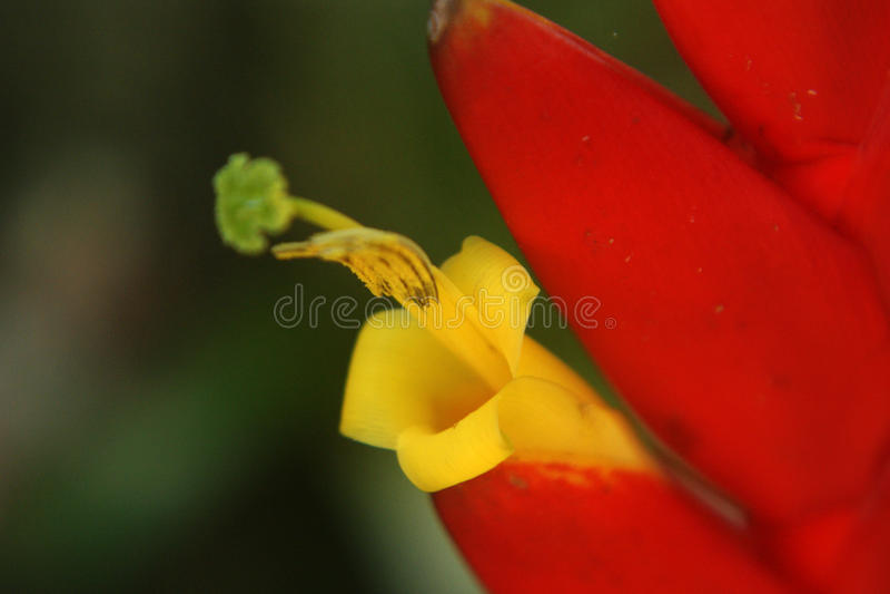 Tropische Bromeliabloem royalty-vrije stock foto's
