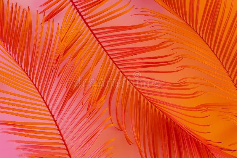 Tropische de zomerachtergrond - kleurrijke exotische bladeren stock foto's