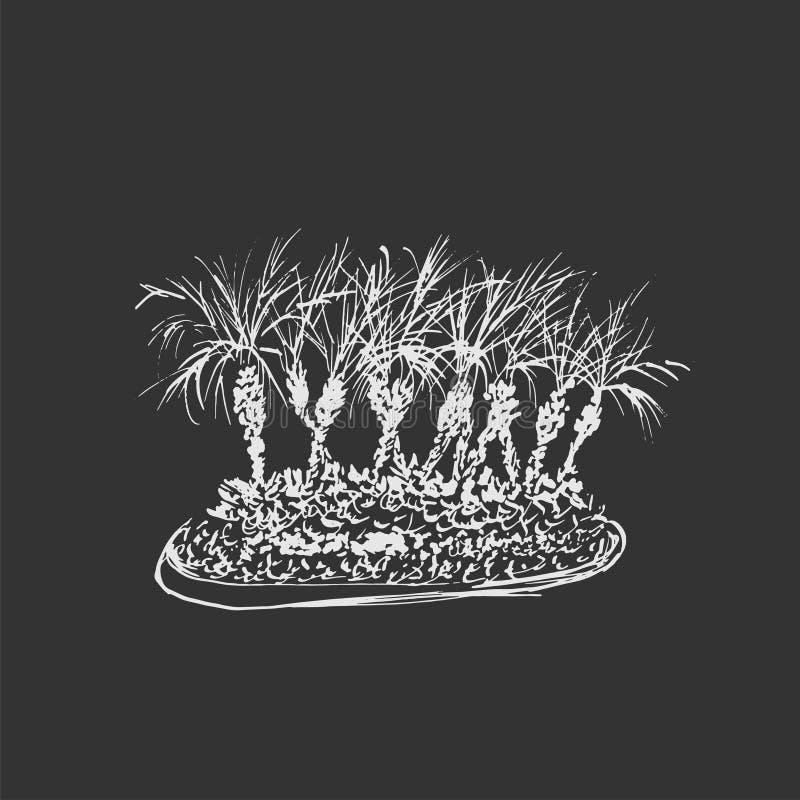 Tropische die palmen op donkergrijze achtergrond worden geïsoleerd Illustratie van kokospalmengroep Bordimitatie Hand getrokken v vector illustratie