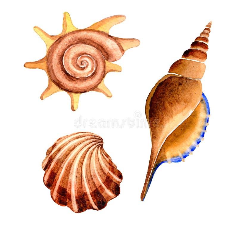 Tropische Elemente der Aquarellsommerstrand-Muschel, Unterwassergeschöpfe vektor abbildung