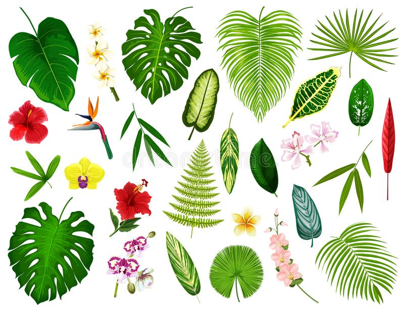 Tropische exotische Anlagen und Blumen treiben Blätter, vector vektor abbildung