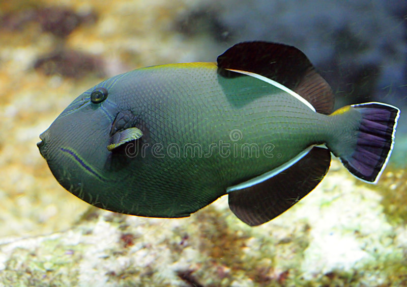 Tropische Fische 1 stockfotos