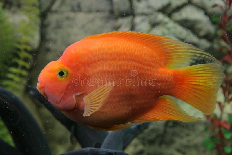 Download Tropische Fische stockfoto. Bild von farbe, unterwasser - 9087878