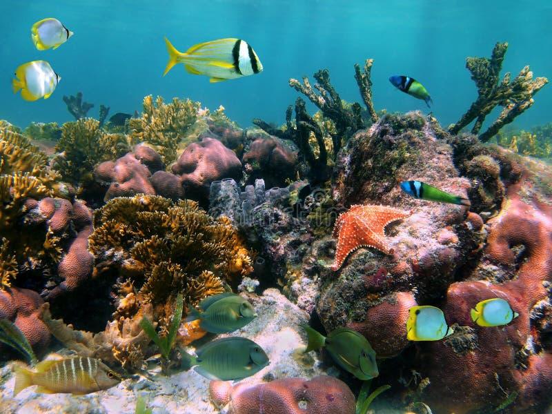 Tropische Fische in den Korallen stockfotos