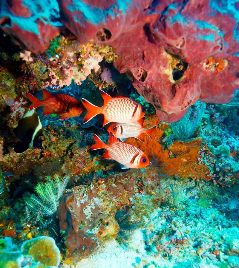 Tropische Fische nähern sich buntem Korallenriff lizenzfreie stockfotografie