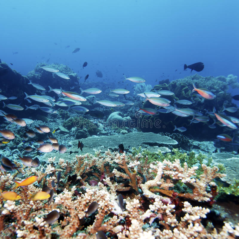 Tropische Fische nähern sich buntem Korallenriff lizenzfreies stockbild