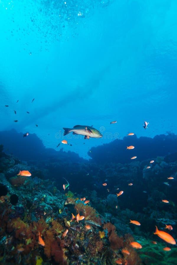 Tropische Fische nähern sich buntem Korallenriff lizenzfreie stockbilder