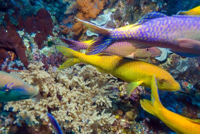 Tropische Fische nähern sich buntem Korallenriff lizenzfreie stockfotos