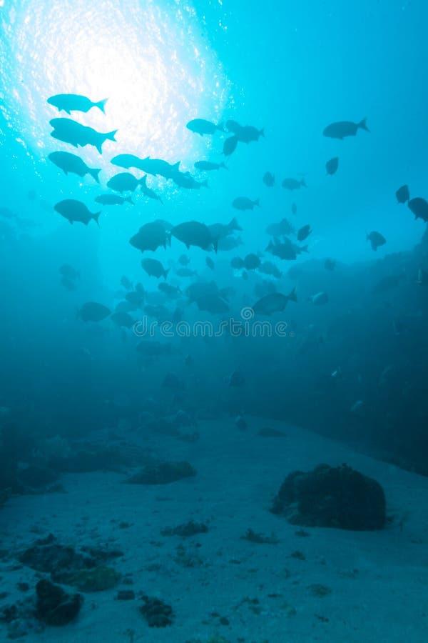 Tropische Fische nähern sich buntem Korallenriff stockfoto