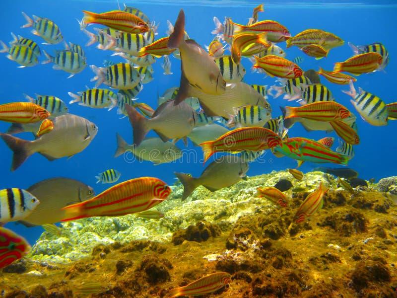 Tropische Fische und Korallenriff stockbild