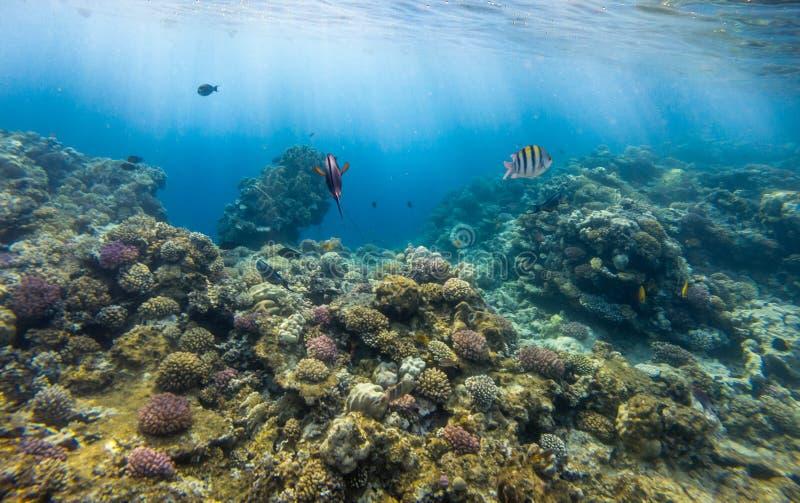 Tropische Fische und Korallenriff im Sonnenlicht lizenzfreies stockbild