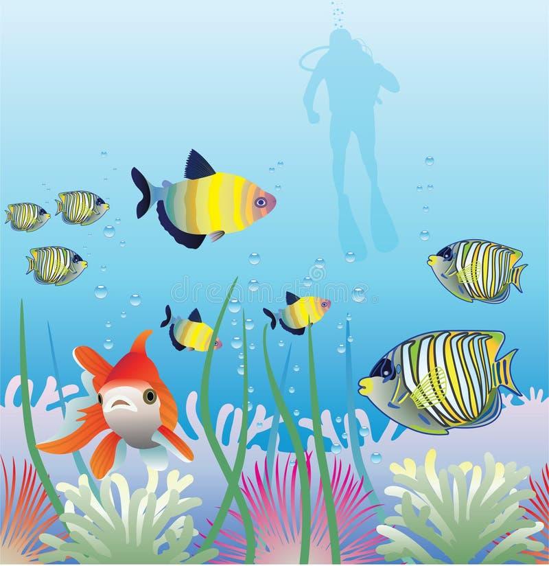 Tropische Fische und Unterwasseratemgerättaucher vektor abbildung