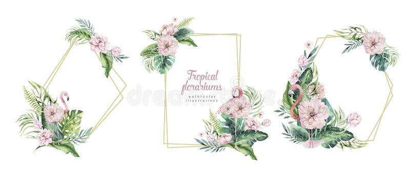 Tropische florariums Gold des Handgezogenen Aquarells mit Flamingo Exotische florarium Rahmenillustrationen f?r Text, Dschungel stock abbildung